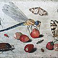 La libellule, l'aiguille du diable
