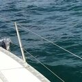 Dauphin à tribord !