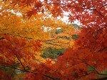 2006_11_26_Kinkakuji_Kyoto_Koyo__19__rs