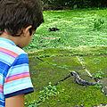 Petite leçon de chose: les crocodiles