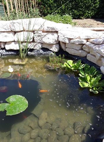 pond12