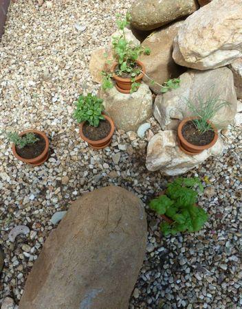 Petit jardin-réduites (3)