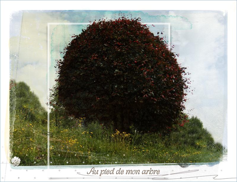 mon arbre_l'été