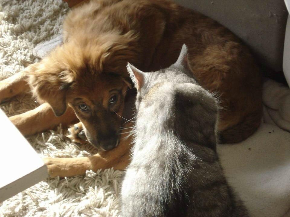 Must et le chat
