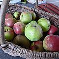 9 octobre - pommes compotées oui mais....pommes au sirop c'est très bon pour changer...