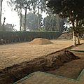 Le jardin de giza se met au vert !!!