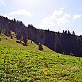 Sapinière bordant la prairie à Barlagne...
