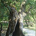 arbre5