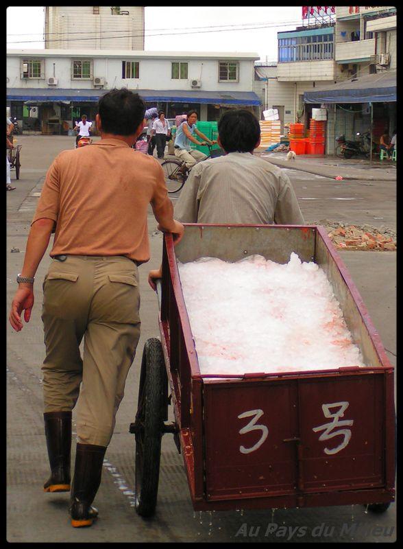 Archipel de Zhou Shan la chaine du froid