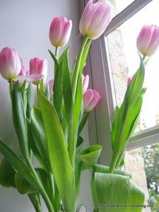 Tulipes____la_Bobin_013