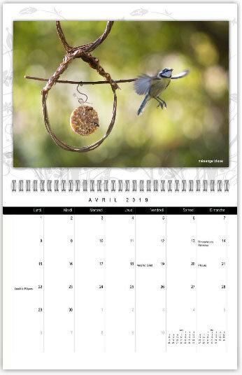 calendrier-oiseaux03