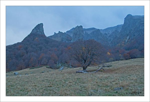 Sancy vallee dent arbre soir 271012