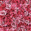 L'exposition des journées de la rose de doué-la-fontaine