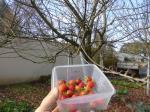 6-fraises (22)