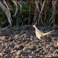 Dans la plaine de reymure