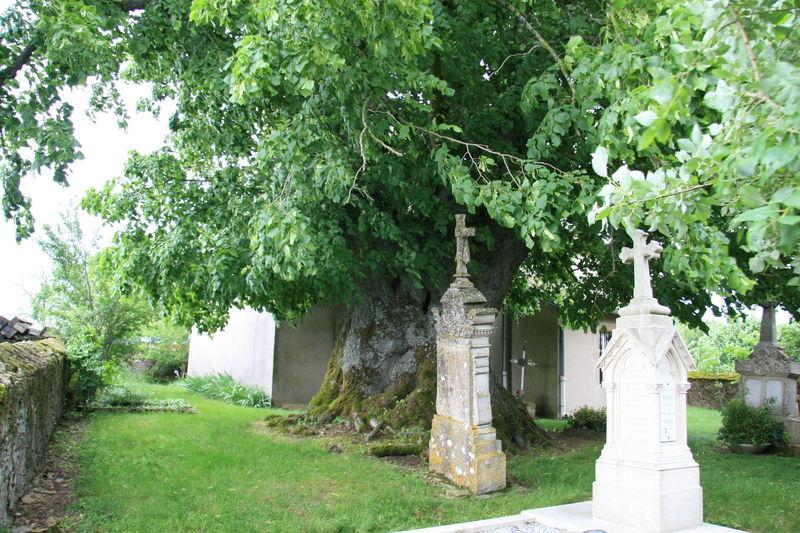 IMG_5054 Tilleul de Bussières