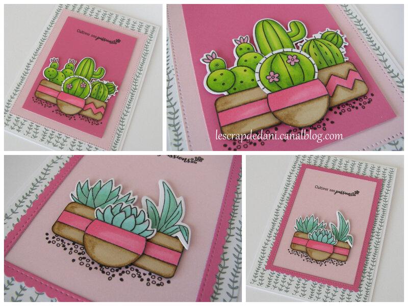 Dani zooms cartes cactus et succulentes