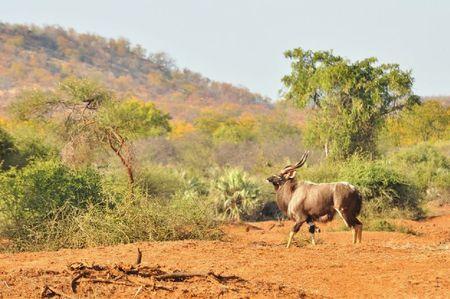 Afrique du Sud (413)