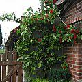 mai-2005-jardin 001