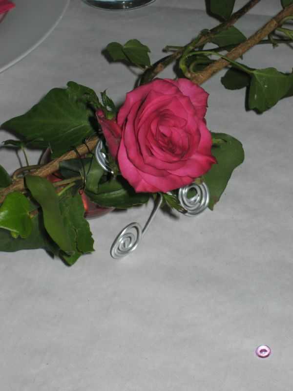Rose et lierres