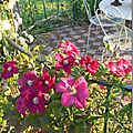 Windows-Live-Writer/Jardin_10232/DSCN0765_thumb
