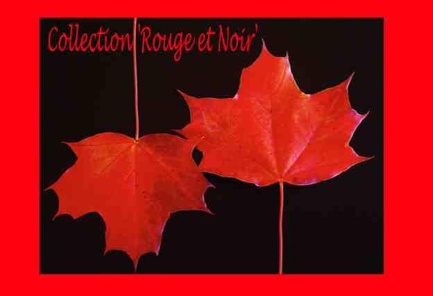 Z collection 'rouge et noir'