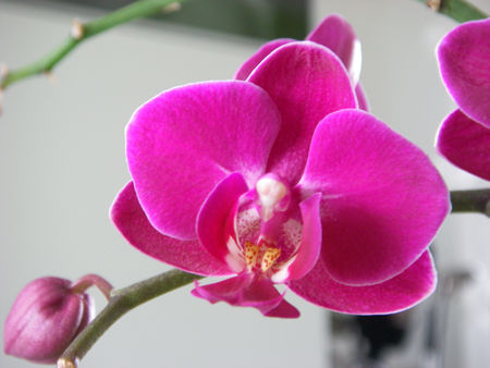 Orchid1