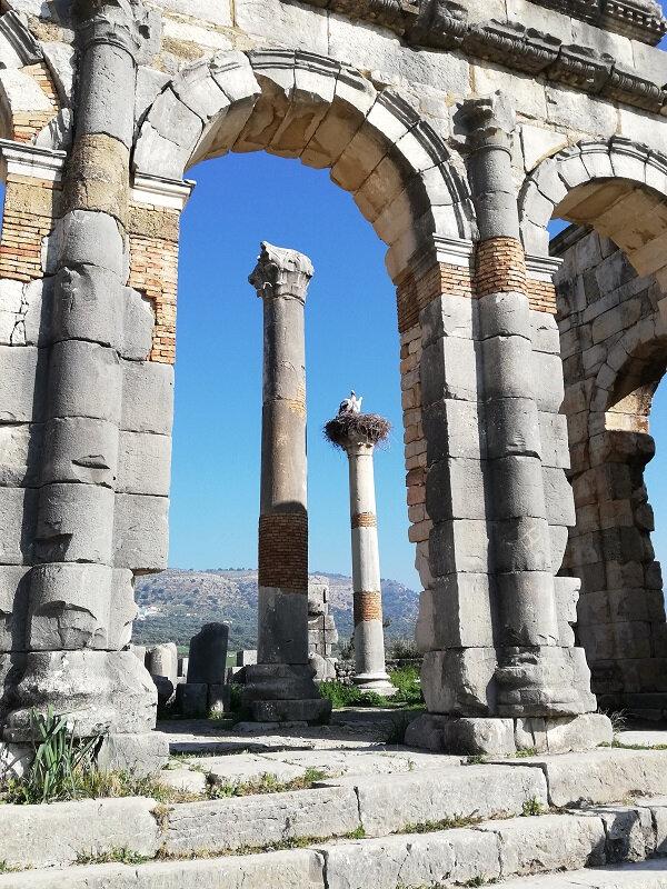 maroc volubilis arc colonnes cigognes