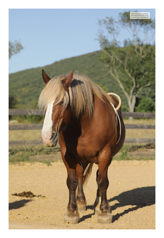 Photos JMP©Koufra 12 - El Rancho - Le Mas de Sisco - 25082020 - 0065
