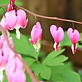 Les fleurs aux mille couleurs